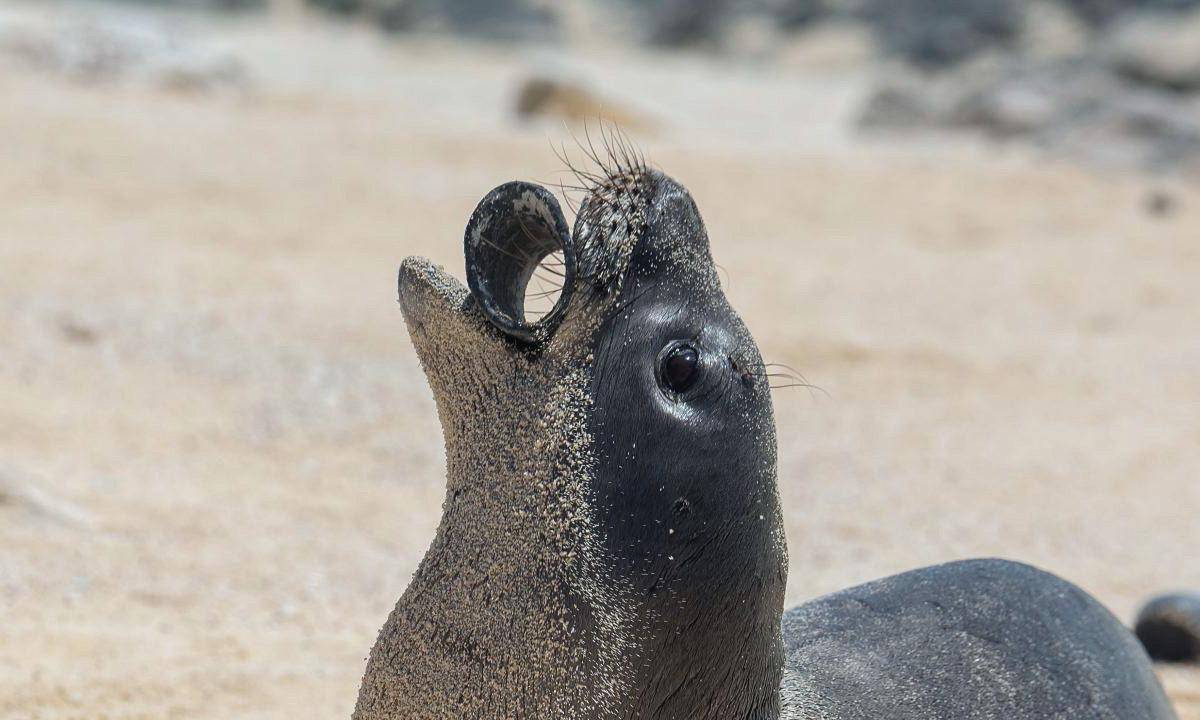 foca plastico